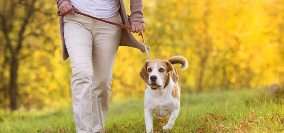 Could a Dog Walking App be an Insurance Liability?